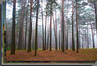Картинки природа беларусии хорошее качество