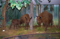 Музей природы Беловежской пущи