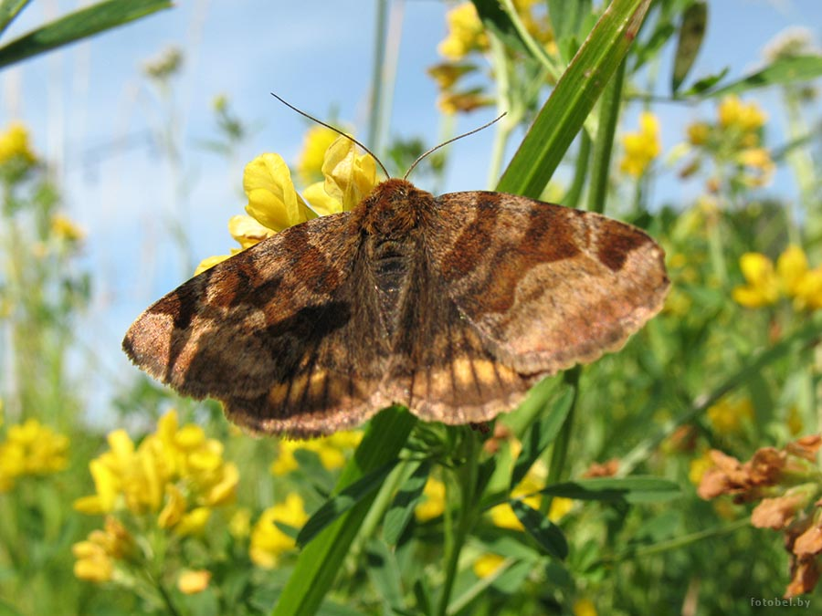 → насекомые → бабочки и мотыльки