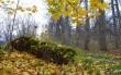 белорусская осень