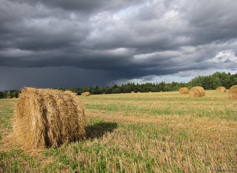 Белорусский пейзаж, фото Натальи Косарь