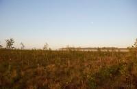 фото болота Ельня