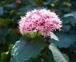 Цветы Беларуси