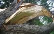 ураган в Беларуси