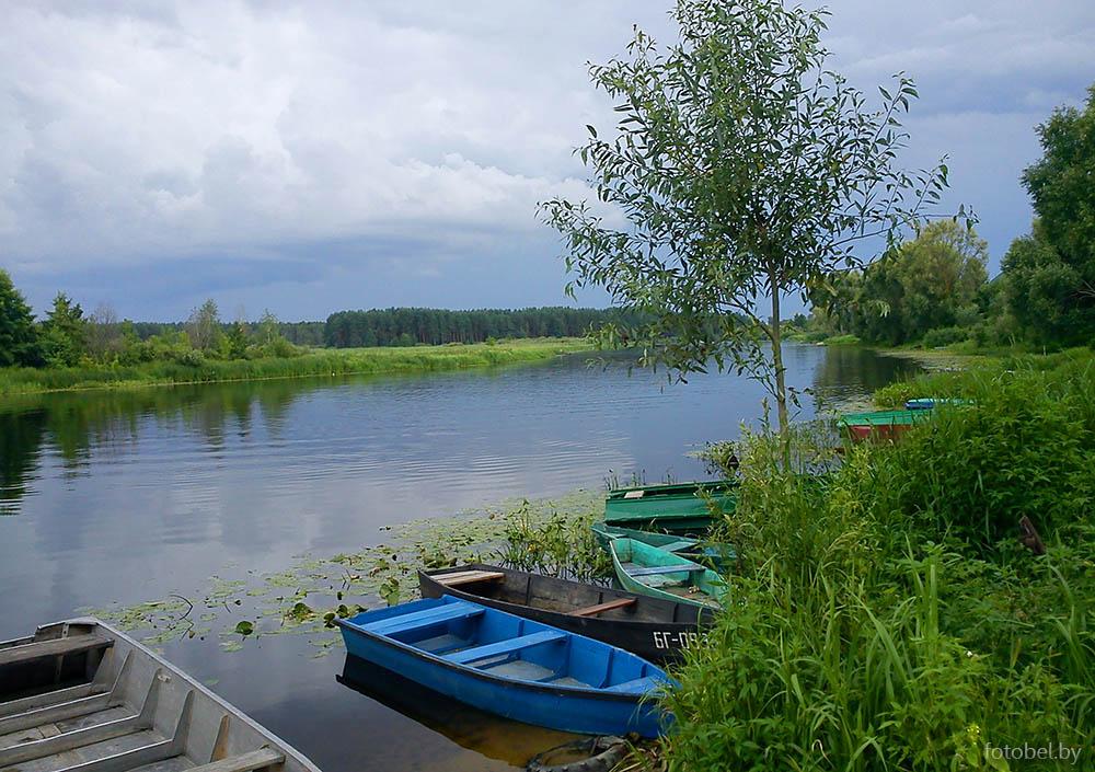 рыбалка в злынковском районе
