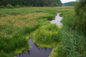 Река Миранка