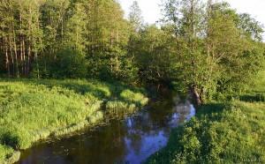 Река Плиса
