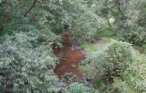 Река Язвинка