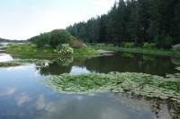 Водохранилище Дички