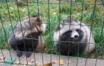 зоопарк Березинского заповедника